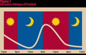 Cortisol-Circadian-Rhythm